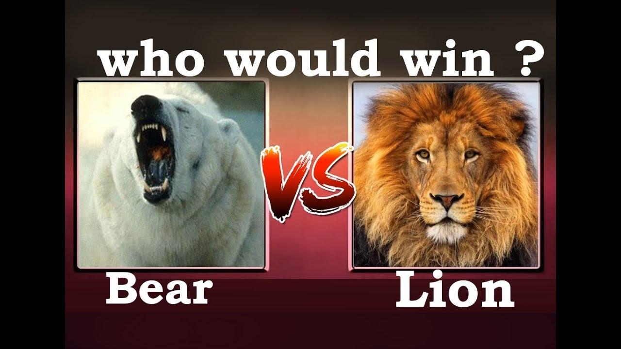Lion Vs Bear Who Would Win Youtube
