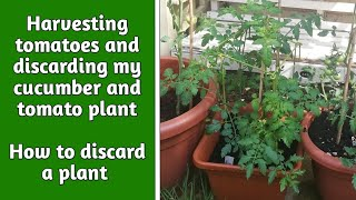 Discarding tomato and cucumber plant| how to discard a plant| Garden Ideas