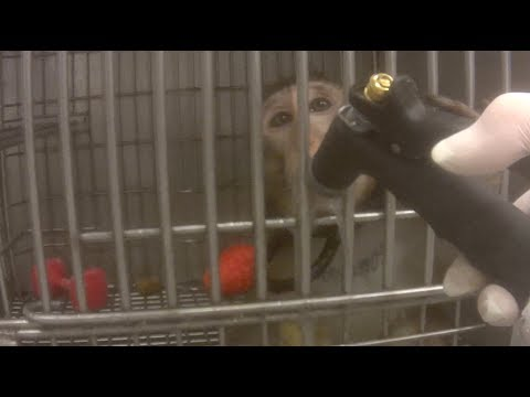 LCA Exposes Cruel Neglect of Macaque Monkeys at ITR Laboratories