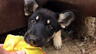 Щенок хотел съесть пакет! Маму щенка бросил хозяин.