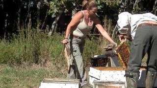 смотреть онлайн видео пчеловодство