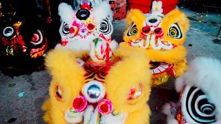 [UTAR Lion Dance Division] Restaurant 520 Sungai Long Grand Opening