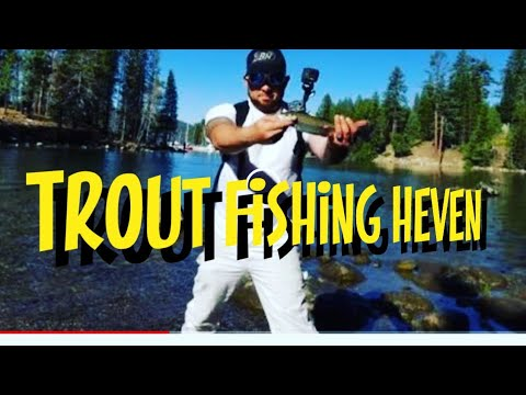 Trout Fishing In Shaver Lake California And Huntington Lake California