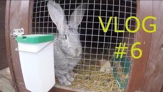 20-dziesto dniowe młode króliki, Kilka informacji Vlog#6