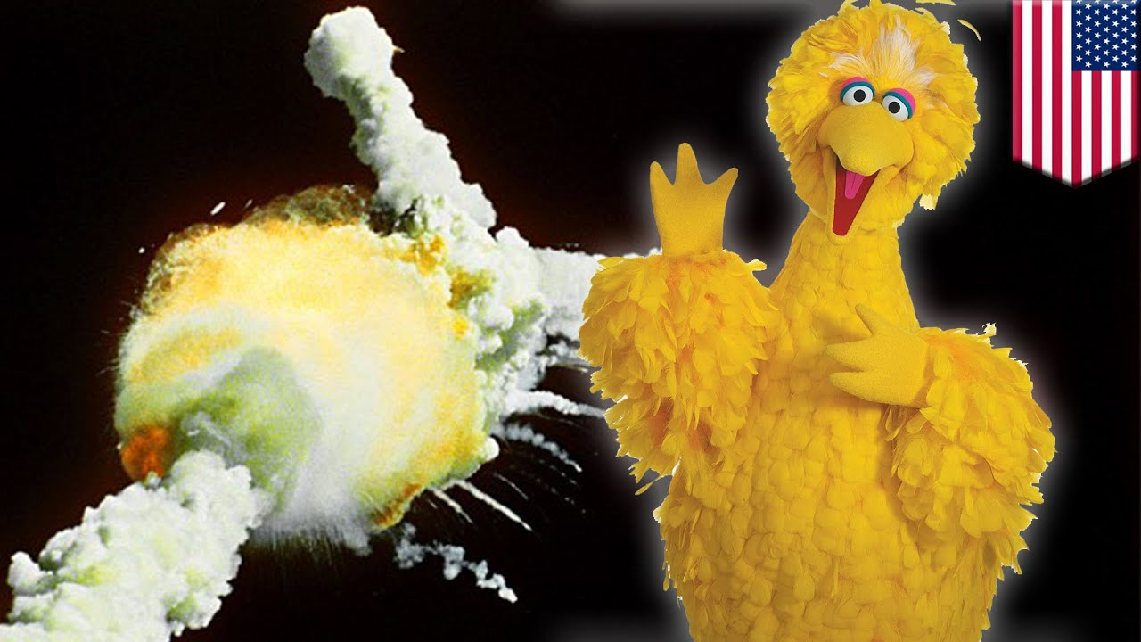 Sesame Street S Big Bird Cheated Death Was Set To Fly On