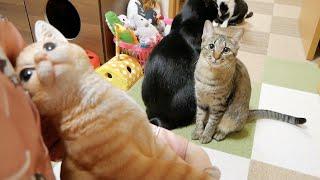 知らない猫を抱っこしたら嫉妬しちゃった猫がこちらです