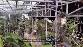 Hướng dẫn làm hệ thống tưới cho vườn lan