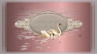 Футаж для надписи Лебеди 2