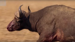Unbelievable! Buffalo Survives A Lion Attack | The Hunt | BBC Earth Unplugged