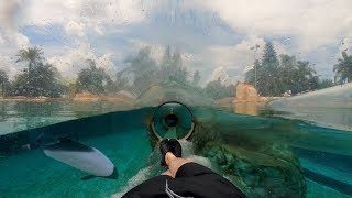 Dolphin Plunge (4K On-Ride) Aquatica Orlando