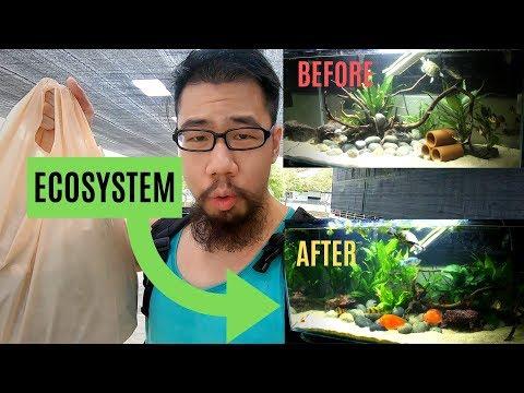 Building An ECOSYSTEM Aquarium