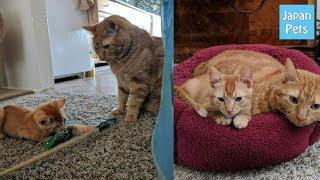 ずっと一人っ子だった猫。新入り子猫に戸惑うも猛烈アタックに屈して最高のコンビに! - Japan Pets thumbnail