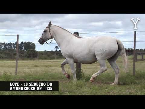 LOTE   10 SEDUÇÃO DO AMANHERCER RP   135