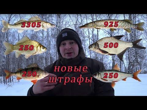 Штрафы за рыбалку 2019. Рыболовные правила 2019.Новые правила рыболовства 2019.