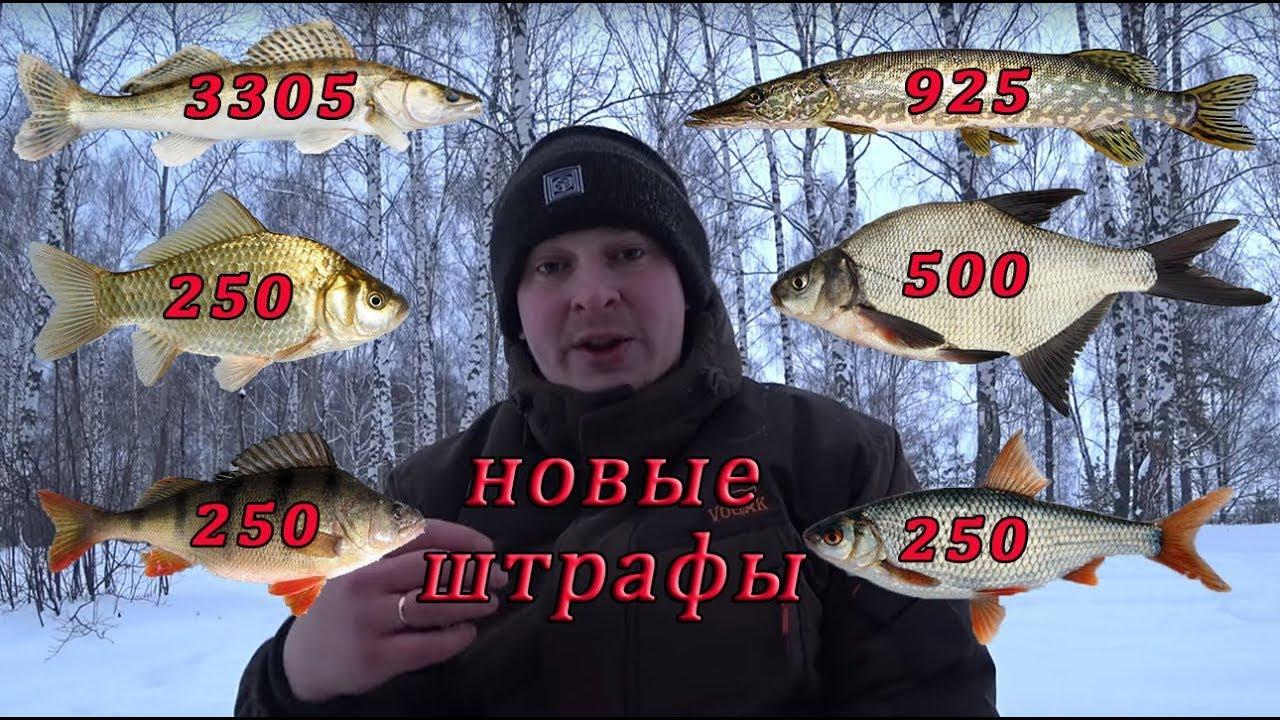 Штрафы за рыбалку 2021. Рыболовные правила 2021.Новые правила рыболовства 2019.Новый закон.