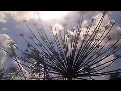 Ожоги от борщевика: фото, как лечить, как избежать