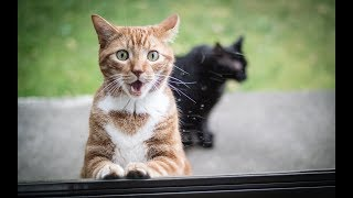 Surprised Cats - Funny Animal Videos Compilation 2018 [BEST OF]