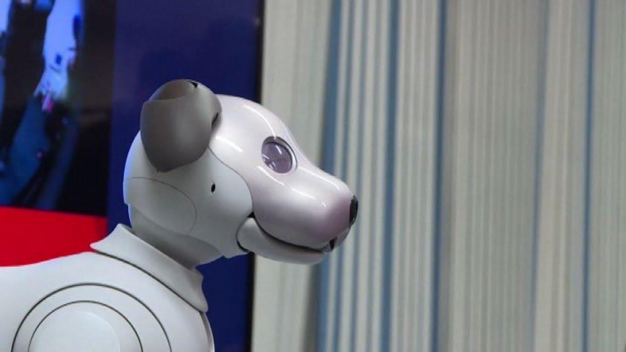 Sony lancia il cane robot intelligente si chiama aibo youtube