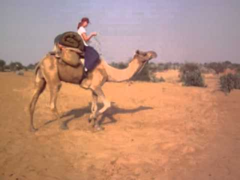How to ride a camel