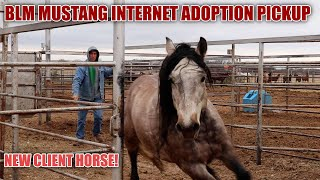 BLM MUSTANG ADOPTION | New Client Horse!
