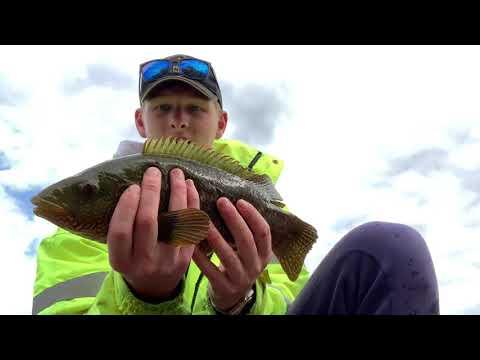 Welcome Back Wrasse Fishing - Cornwall