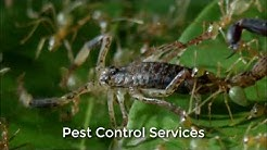 The Phoenix Bed Bug Exterminators (623) 235-0299