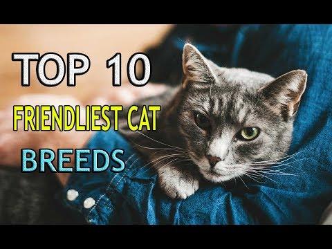 TOP 10 FRIENDLIEST CAT BREEDS OWNING A DOG