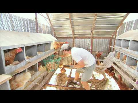 THE EGG COLLECTOR - Inside a Funny Organic Egg Farm