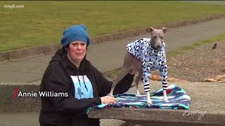 This Tacoma sighthound is on a not so secret mission to save the sh...