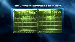 ISS Update: Plants in Space