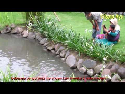 kolam-ikan-terapi-gratis-di-slg-kediri