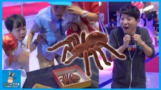 대왕 거미 몰래카메라! 도티 잠뜰 님 몰카 운명은? ♡ 샌드박스 도도한친구들 함께 초대형 거미 로봇 장난감 놀이 Prank Spider | 말이야와친구들 MariAndFriends