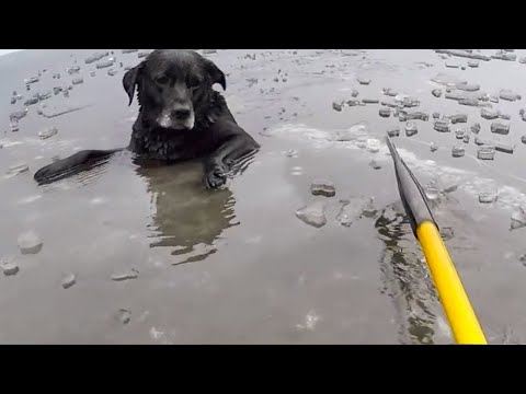 10 most touching and unbelievable animal rescues