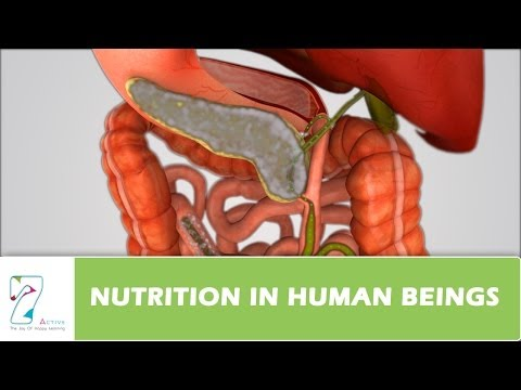 Nutrition in Human Beings
