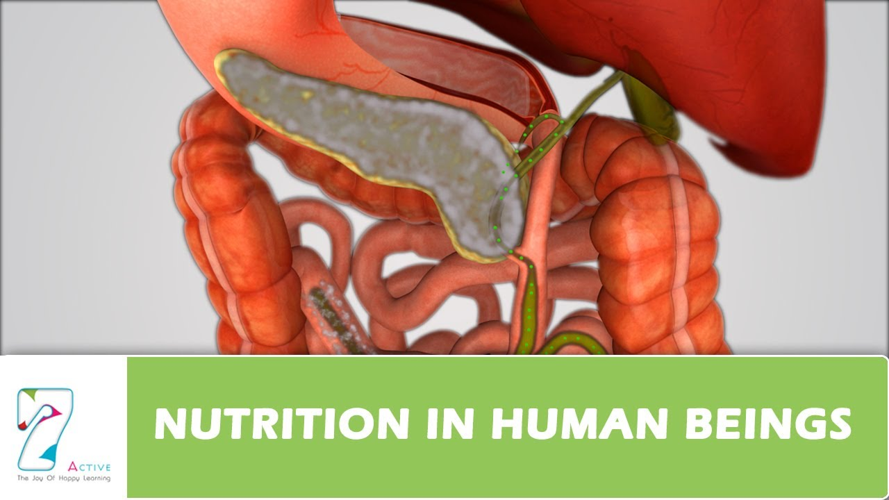 Nutrition in human beings of class10 video & mp3 songs.