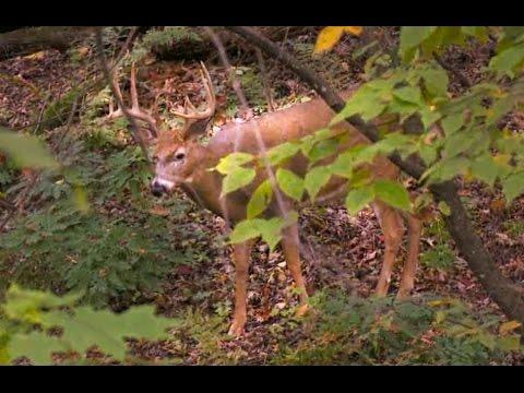 """BIG BLUFF BUCKS in Wisconsin 150""""+ Deer Harvested!"""