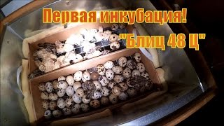 Инкубация перепелинных яиц #2 // День вывода // Жизнь в деревне