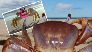 Single Crab Problems thumbnail