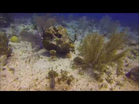 Cayman Islands Scuba Trip with ( Off the Wall Divers)