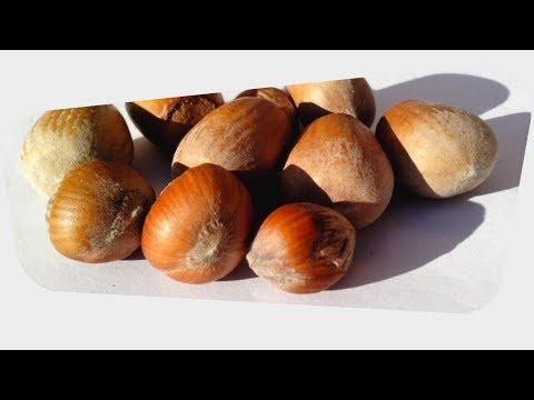 Hazelnut Health Benefits & Nutrition Facts