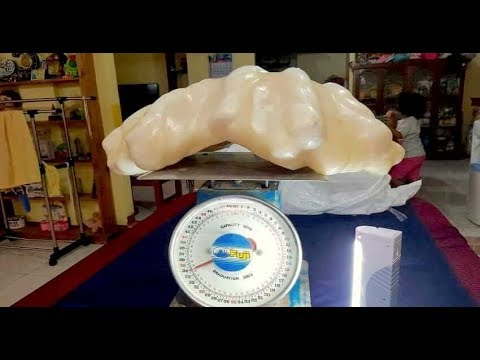 Fisherman Unknowingly Keeps Giant $100 Million Pearl Under His Bed For 10 Years