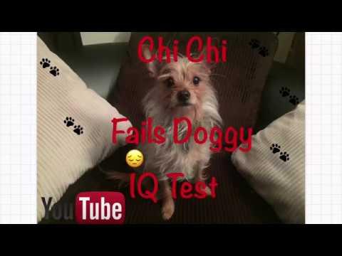 CHI CHI [IQ Test]