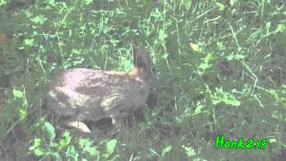 The Bunny Visit