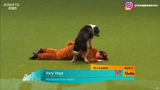 Crufts 2020 Fox heelwork to music routine - Team Bissevov from Norway