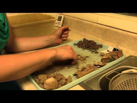 Inside the Archaeology Lab: Washing Artifacts