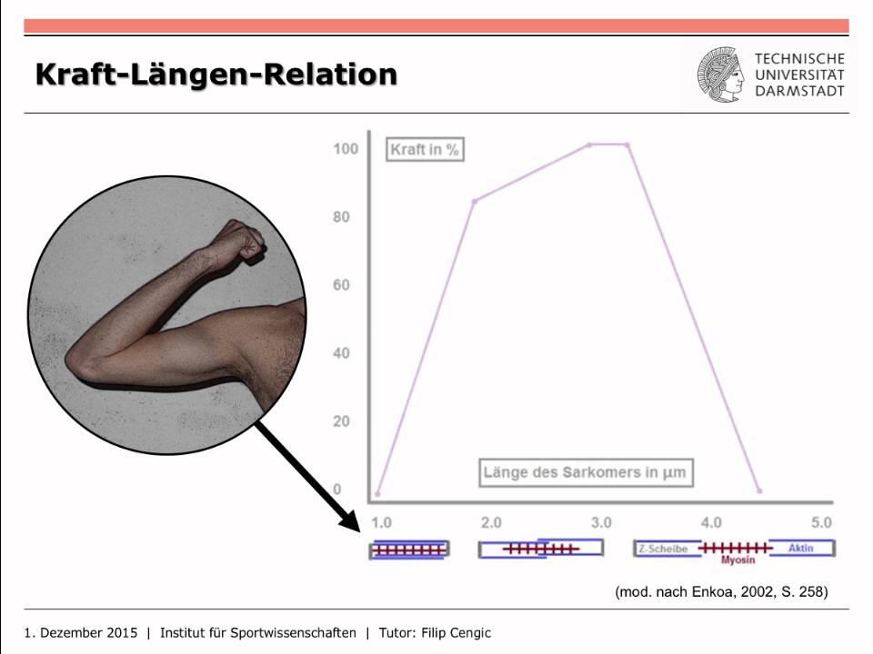 IfS-TUD Wiki: MUS3 Kraft-Längen-Relation - YouTube