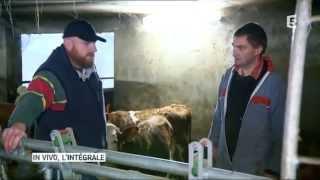 Reportage agricole : vétérinaire rural, il accompagne les éleveurs.