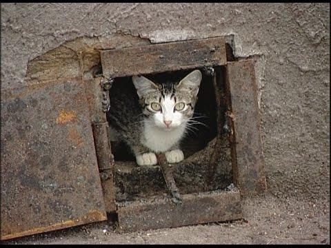 Вопрос: В подвале многоэтажки обосновались кошки, как избавиться?