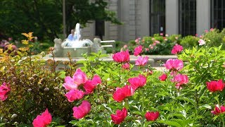 Flowers in front of fountain