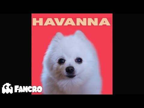Camila Cabello - Havana - Cover Perros